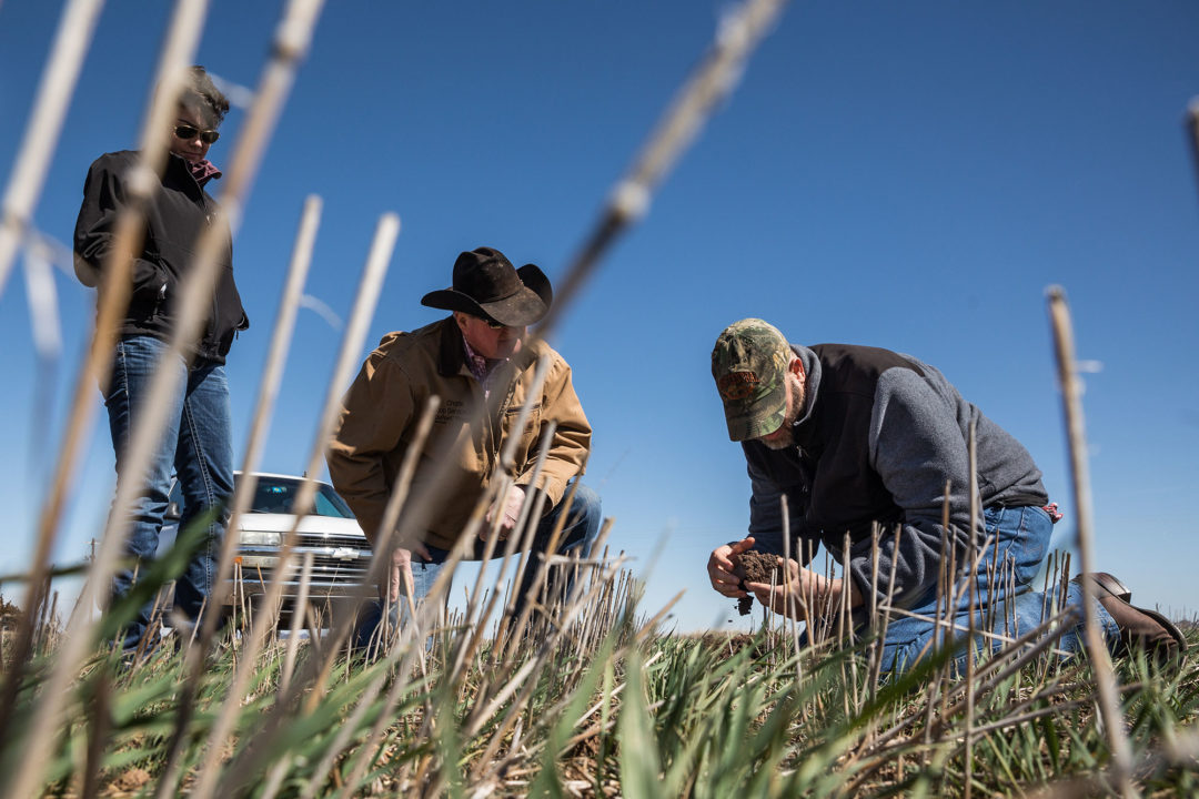 Questions to ask before seeding cover crops