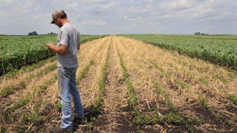 Iowa cover crops