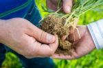 Soil biology
