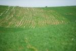 Prevent nitrogen loss