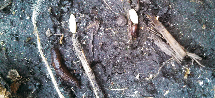 Slugs and Seed