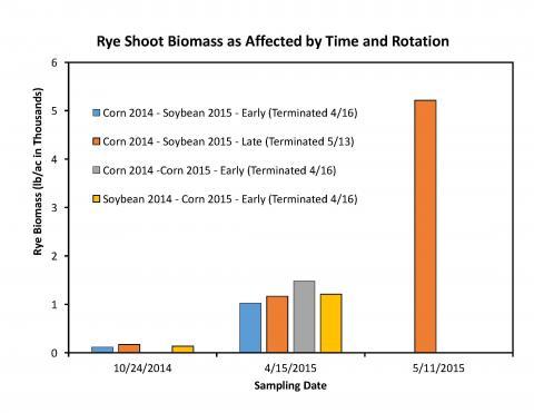 Rye biomass