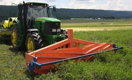 Cover Crop Prevents Weeds