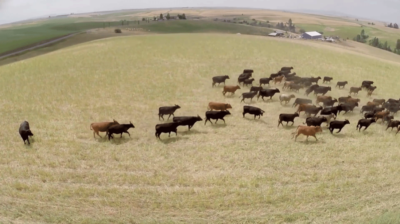 Case Study: Raising Cover Crops for Grazing