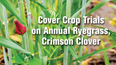 Cover Crop Trials on Annual Ryegrass, Crimson Clover